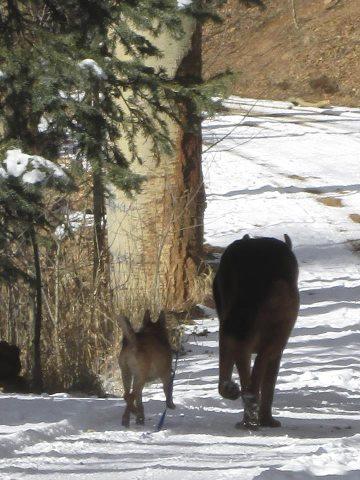 tiberius & jager in woods