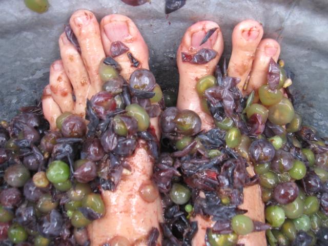 grapes & figs 008