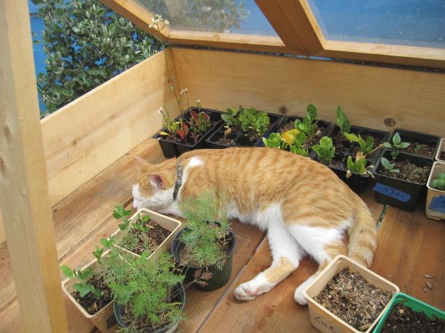 angus grow box 004