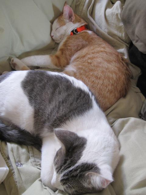kitty snuggle 003