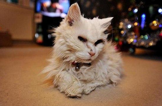 Старейшая кошка в мире
