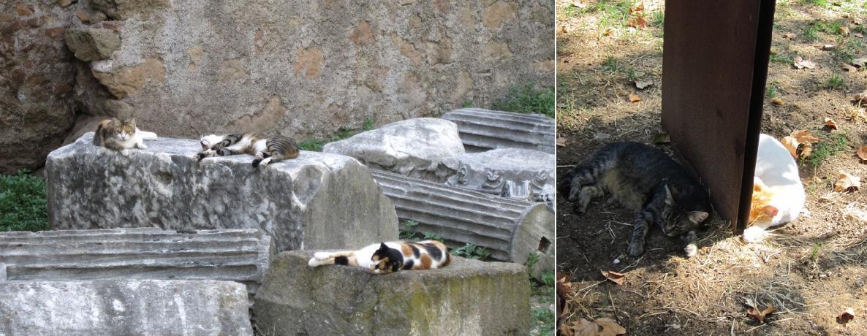 Рим-кошки-возле-дома