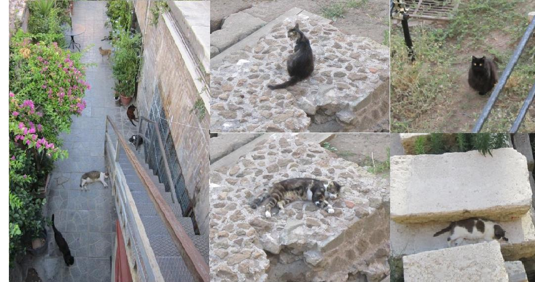 Рим-кошки-общий вид