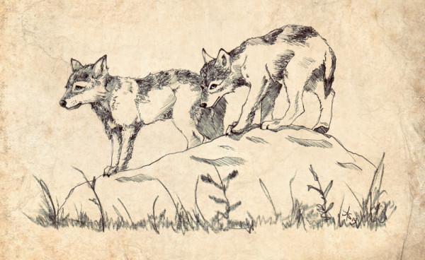 lrhwolfpups