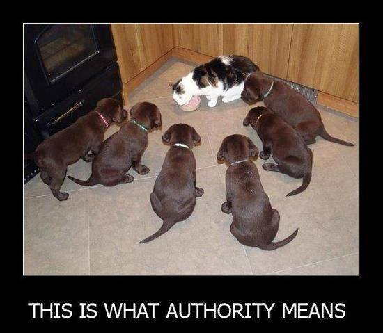 authority defined