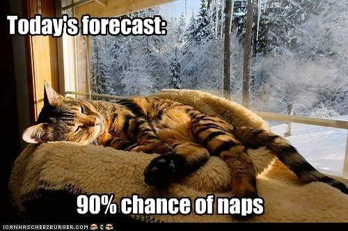 cat weather report