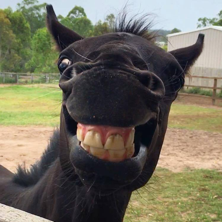 horse with candid camera smile lol