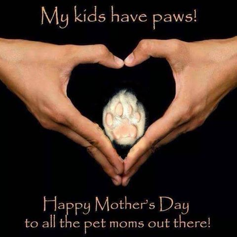 my kids have paws happy mothers day heart