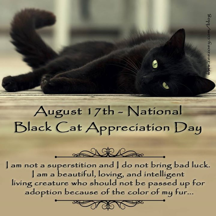 august 17th national black cat day