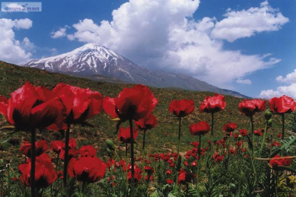 Весной, когда иранская природа опять надевает свой праздничный наряд