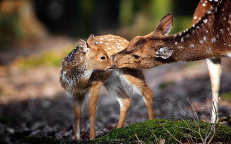 национальный парк Сиях-Кух