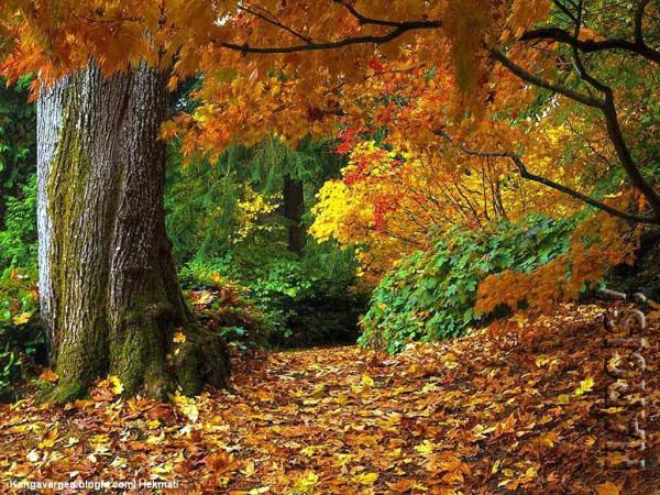 2_autumn497