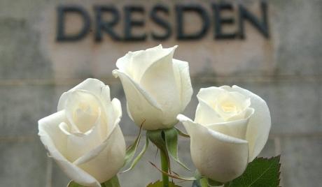 31   highres_розы Дрезден