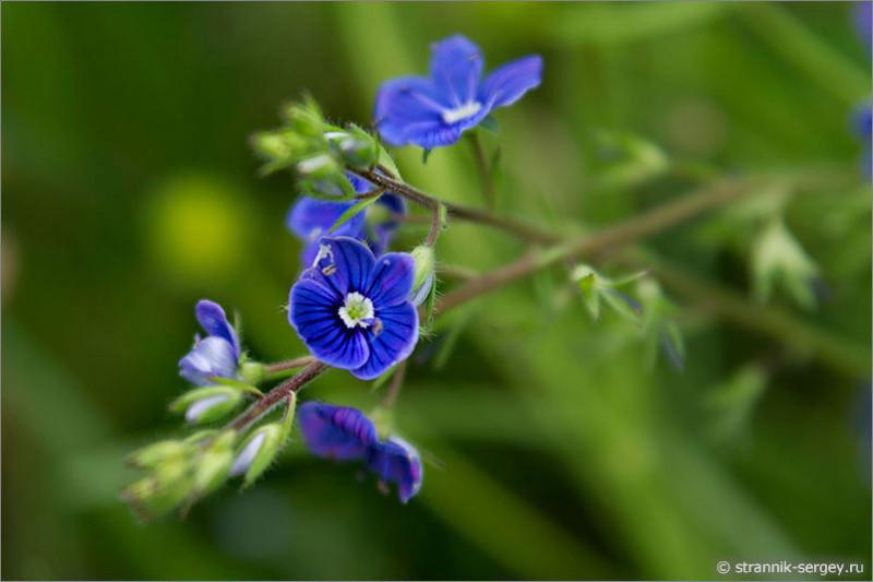 45  Полевые цветы