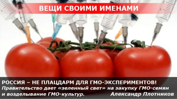РОССИЯ – НЕ ПЛАЦДАРМ ДЛЯ ГМО-ЭКСПЕРИМЕНТОВ