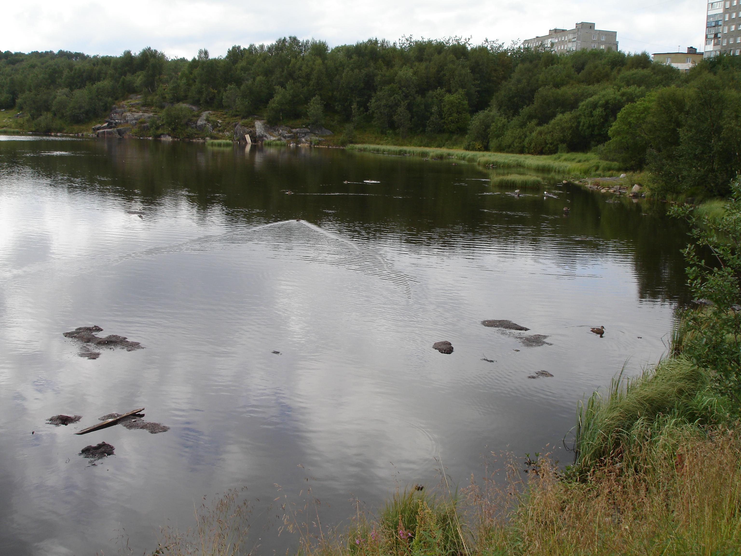 Семёновское озеро - загрязняется и заболачивается