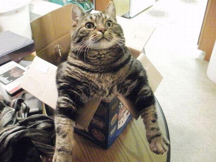 cat-box-21