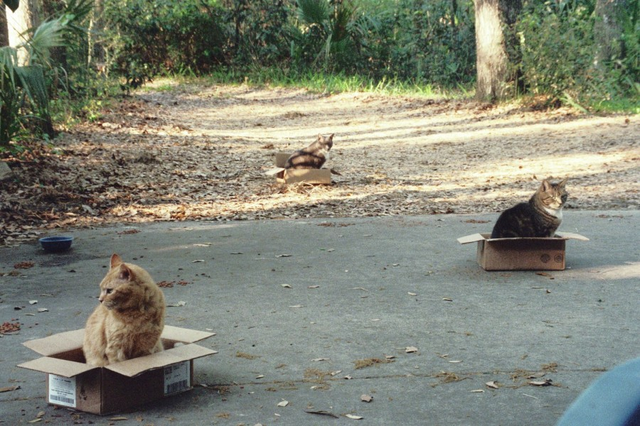 neighborhood-cat-box-sitting