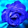 11-blue.jpg