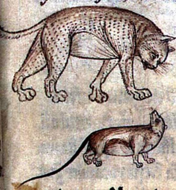 British Library, Additional MS 11283, Folio 15r09b723_XL