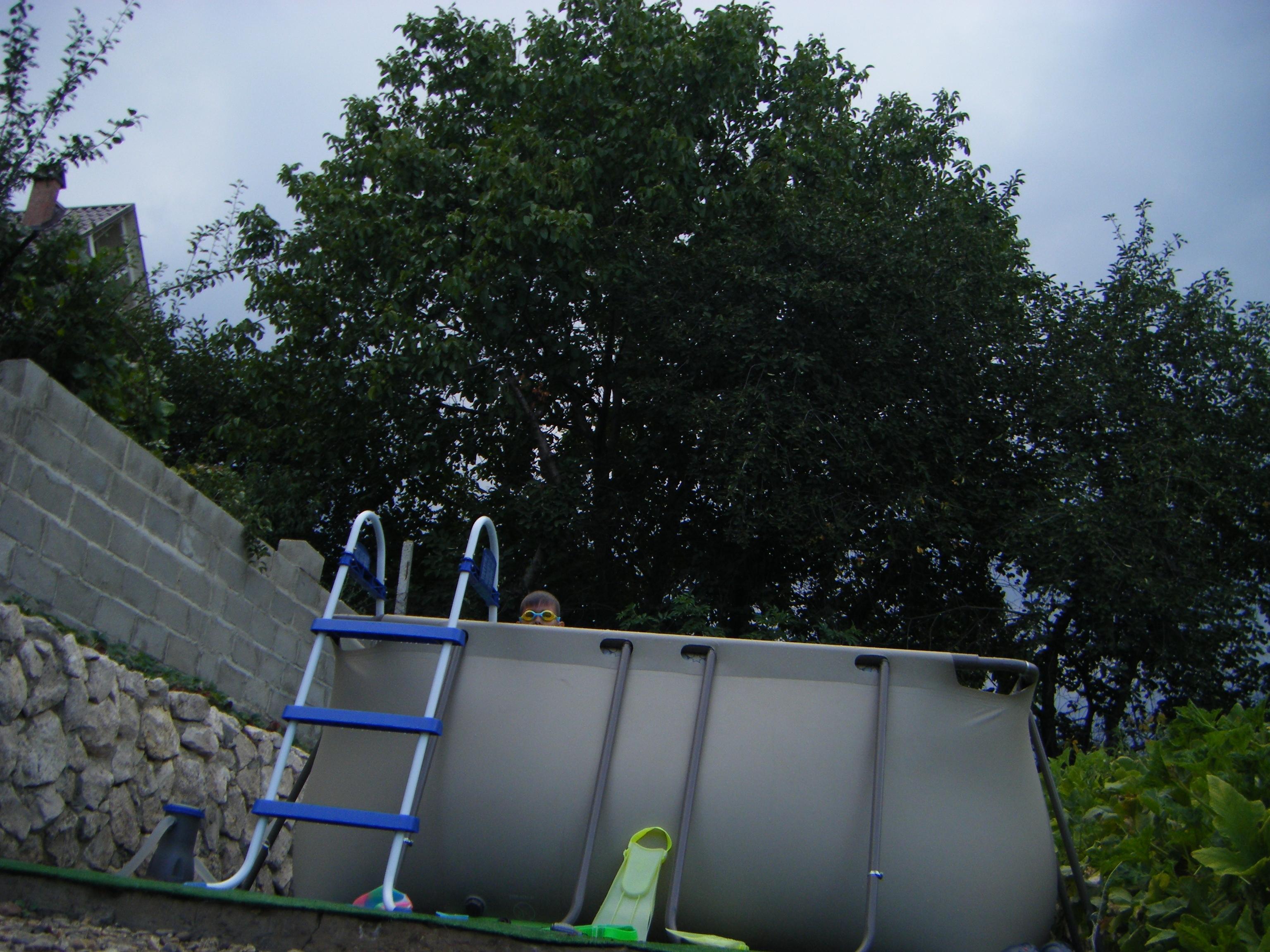 дерева над басиком