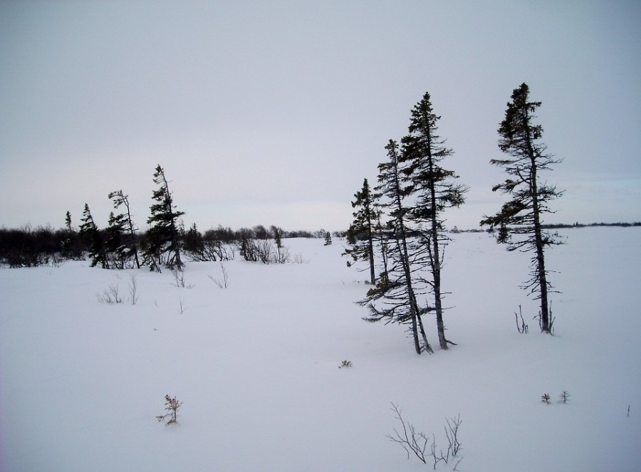 зимняя тундра