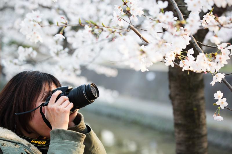 Фотографируя сакуру