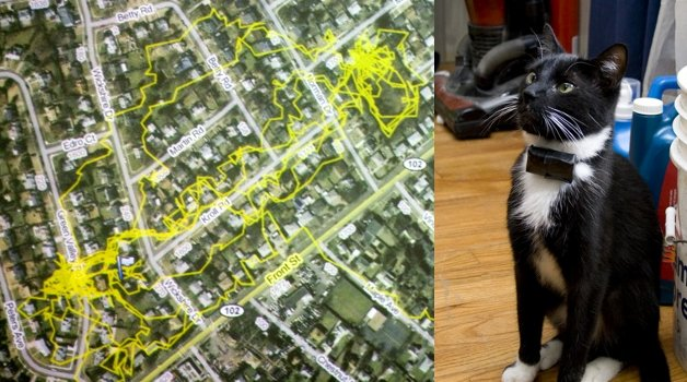 KooKoo, the GPS-Enabled Kitty