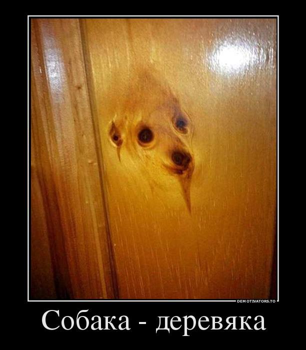 15274201_sobaka-derevyaka