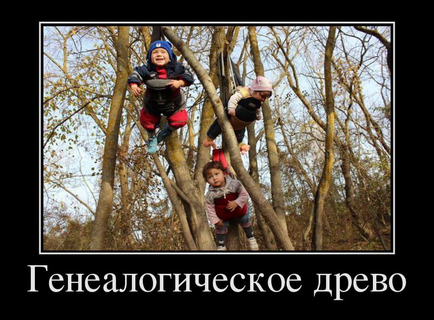 39962317_genealogicheskoe-drevo