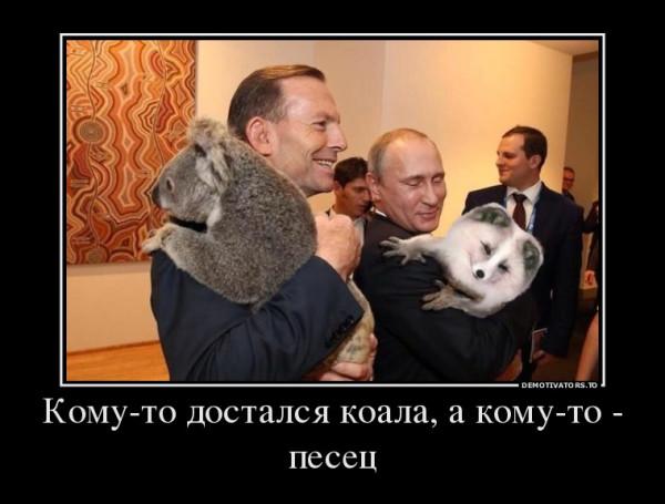 31954005_komu-to-dostalsya-koala-a-komu-to-pesets