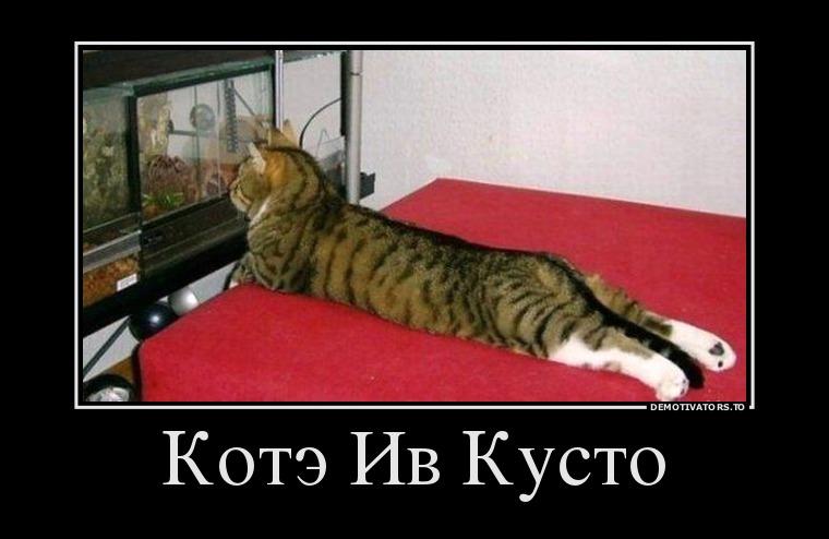 75979320_kote-iv-kusto