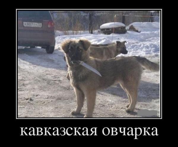 95449894_kavkazskaya-ocharka