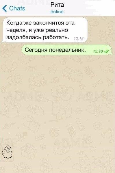 oVijpVT5Zhk