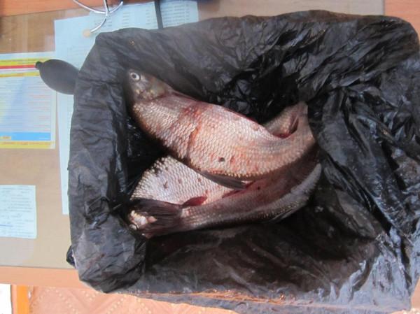 рыба ф