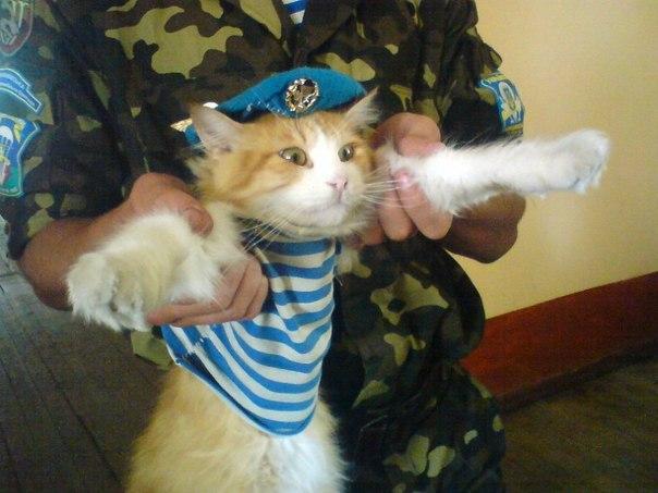 А это казарменный кот Роты Огневой поддержки 1го батальона 79й отдельной аэромобильной бригады.