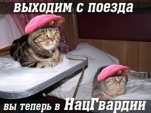 1406630499_blogozhaba05