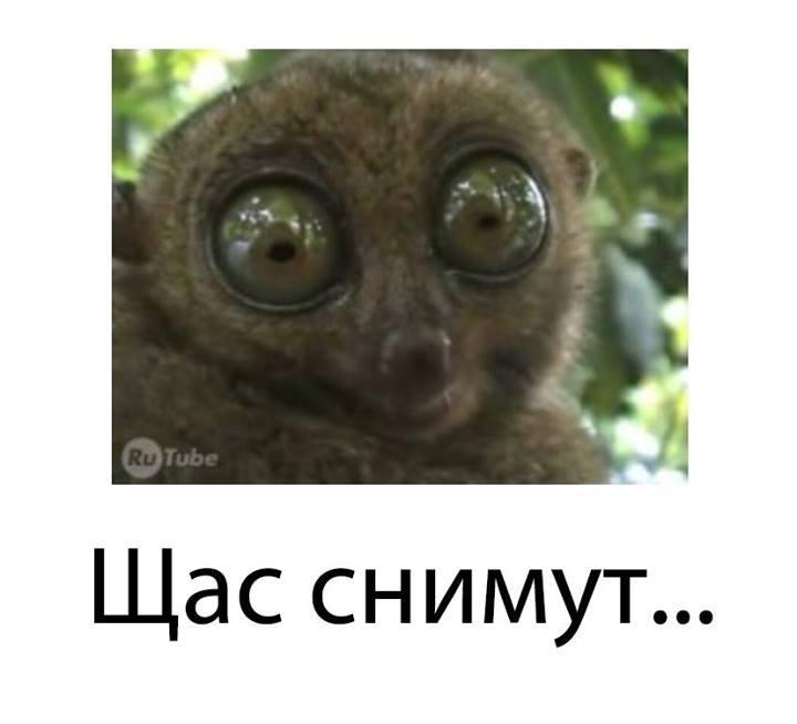 1406632262_blogozhaba41