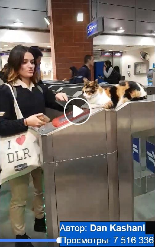 cat-petach-tikva