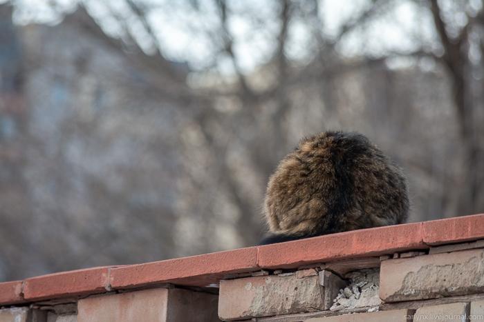 Мягкие лапки встречают весну Саратов,кошки,праздники