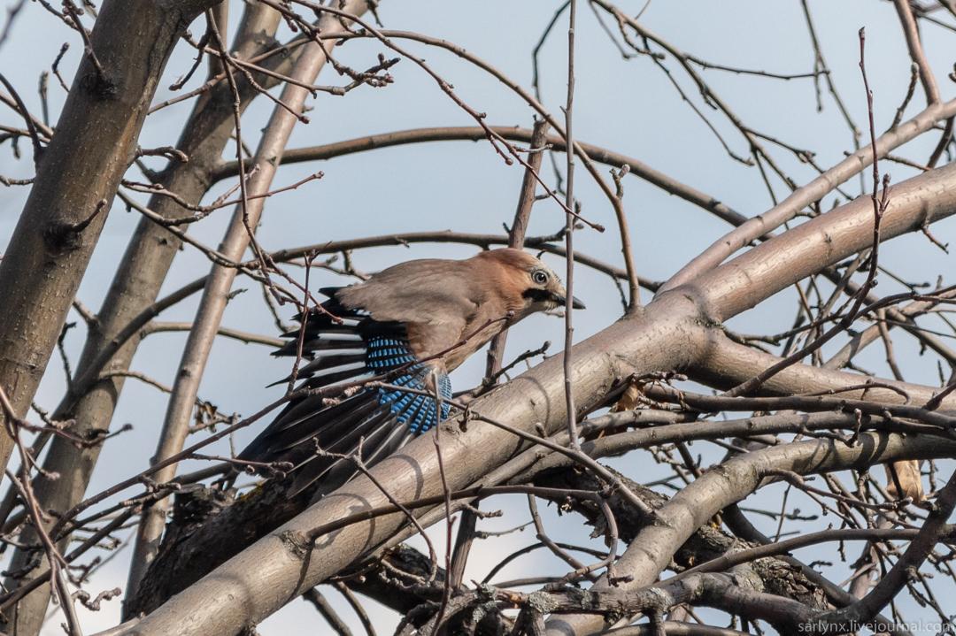 Птичий понедельник. Модный весенний наряд птицы,весна