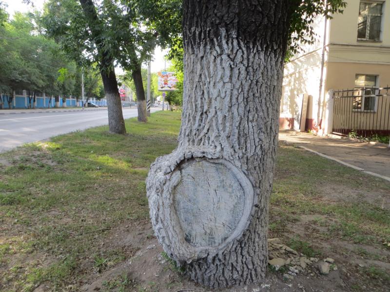 Картина на дереве2.jpg