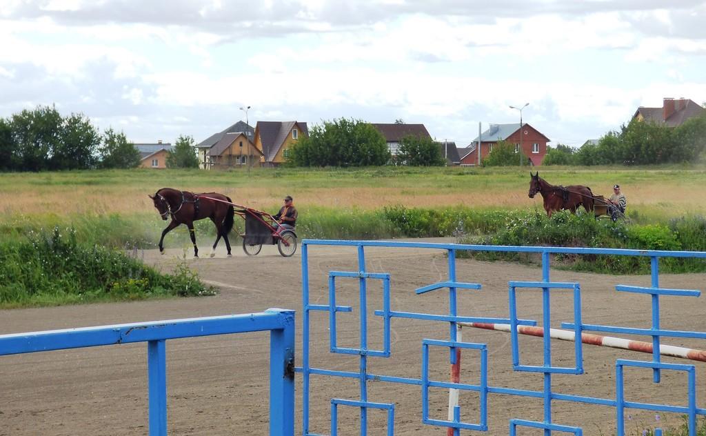 Лошадки5.JPG