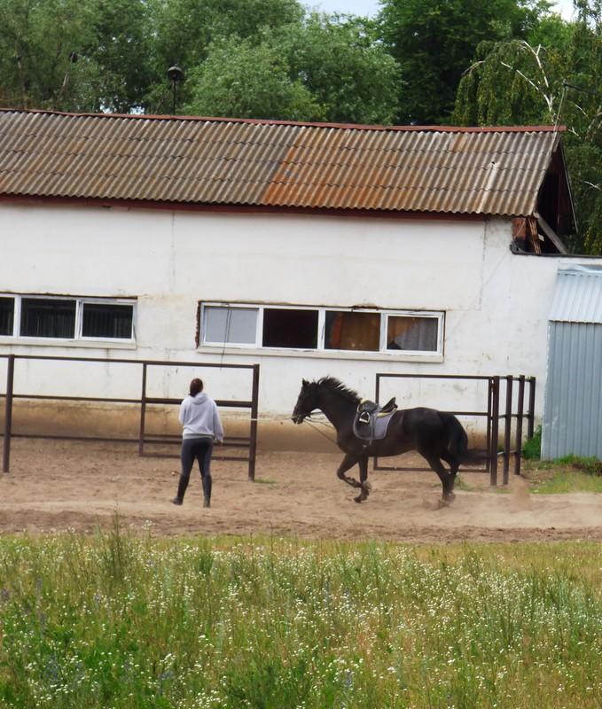 Лошадки3.JPG