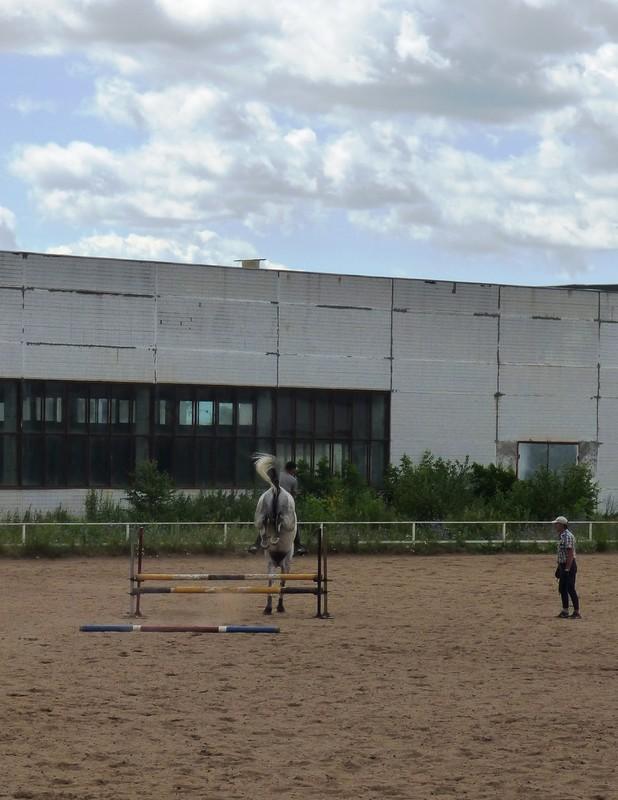 Лошадки2.JPG