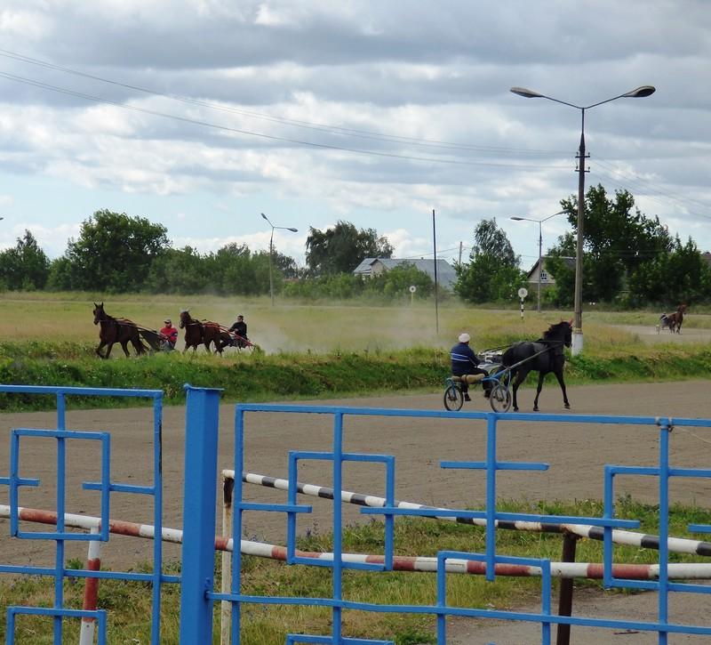 Лошадки4.JPG