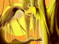 Heron Sunset_200x150