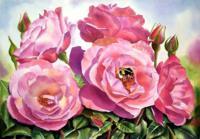 hannes-rose_200x139