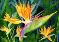 bird-of-paradise-janis-grau_200x143