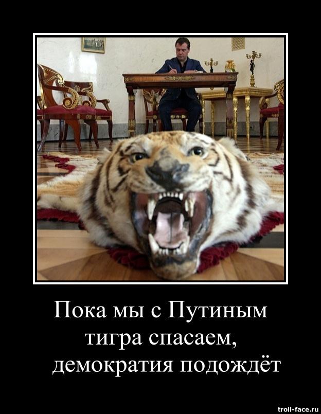 medvedev_putin_poka_my_s_putinym_tigra_spasaem_demokratia_podozdiot_demotivator